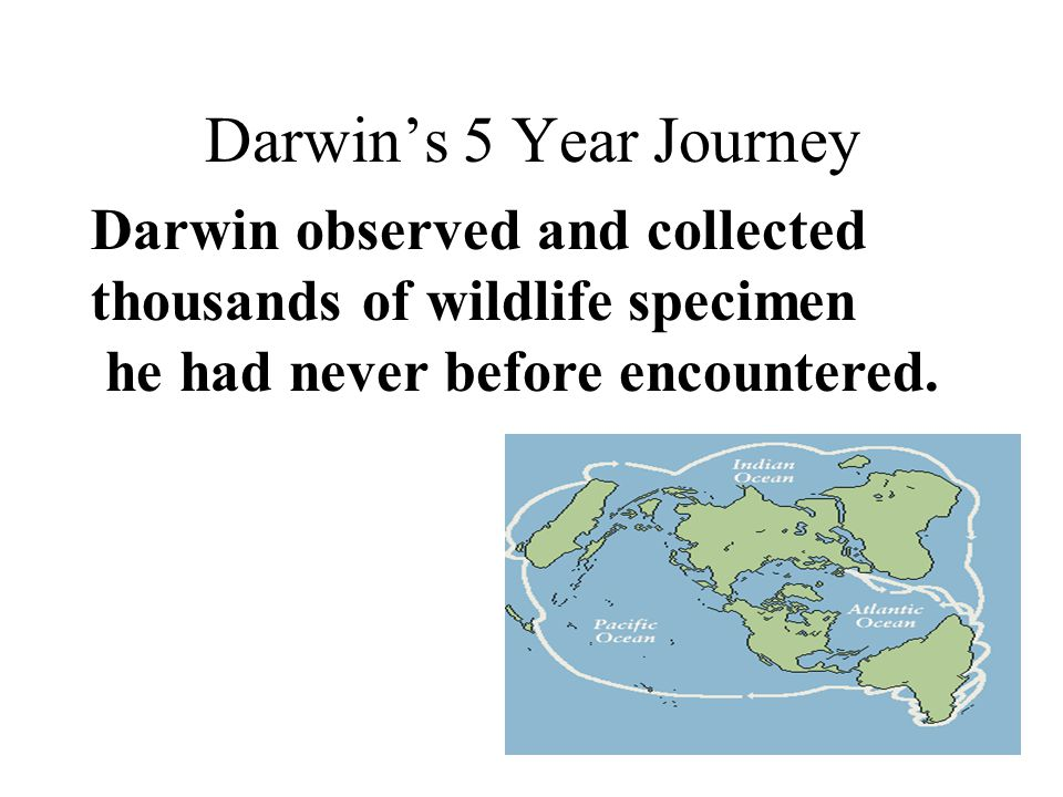 Darwin's 5 Year Journey Darwin observed and collected thousands of wildlife specimen he had never before encountered.