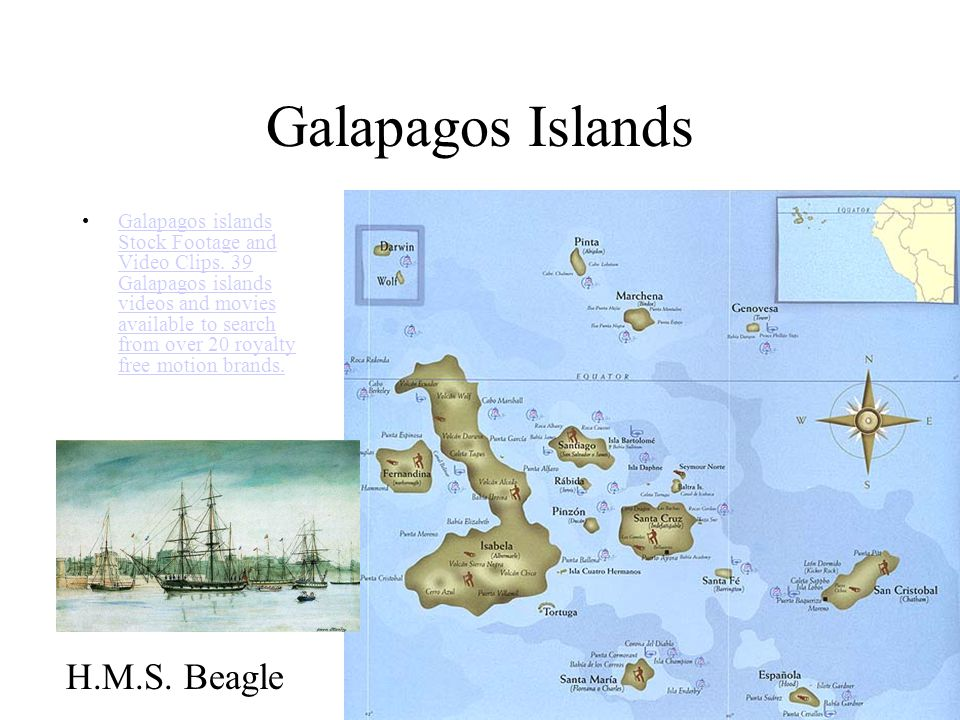 Galapagos Islands Galapagos islands Stock Footage and Video Clips.