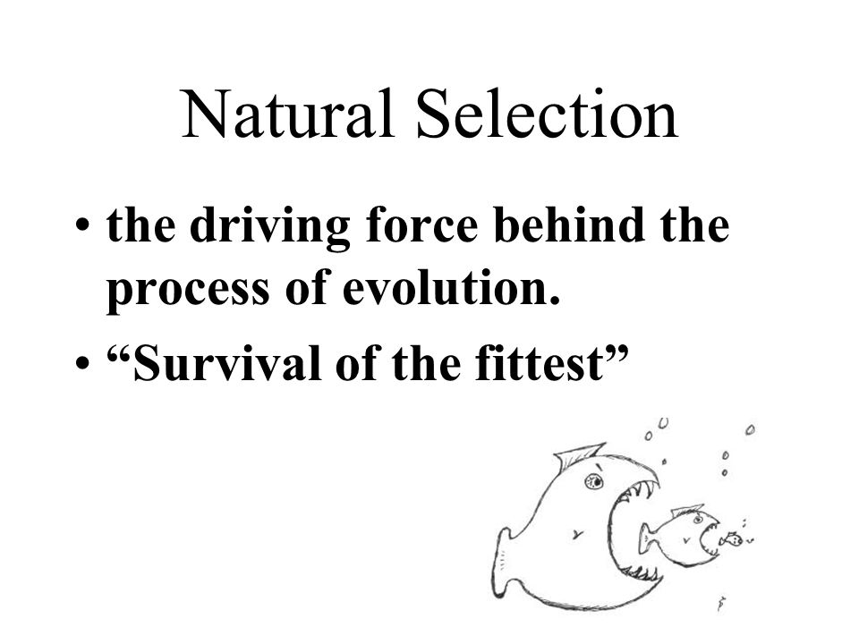 Natural Selection the driving force behind the process of evolution. Survival of the fittest