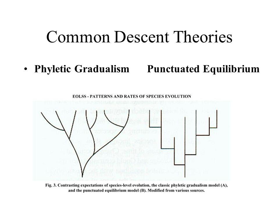 Common Descent Theories Phyletic GradualismPunctuated Equilibrium