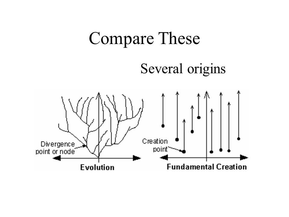 Compare These Several origins