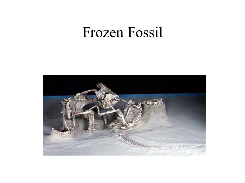 Frozen Fossil