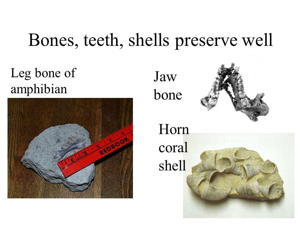 Bones, teeth, shells preserve well Jaw bone Horn coral shell Leg bone of amphibian