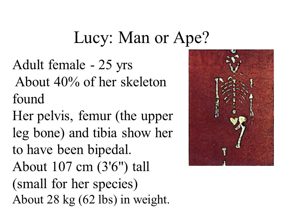 Lucy: Man or Ape.
