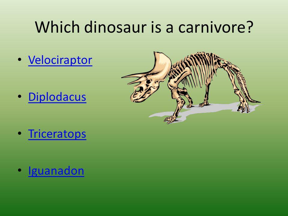 Which dinosaur is a carnivore Velociraptor Diplodacus Triceratops Iguanadon
