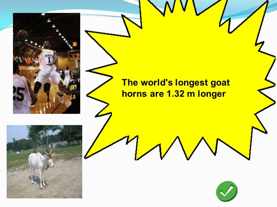 The world's longest goat horns are 1.32 m longer