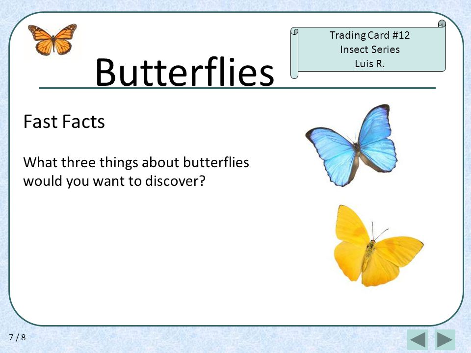 Butterflies Fast Facts What three things about butterflies would you want to discover.