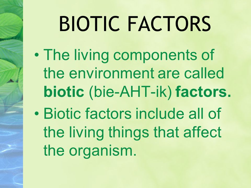 BIOTIC FACTORS The living components of the environment are called biotic (bie-AHT-ik) factors. Biotic factors include all of the living things that a