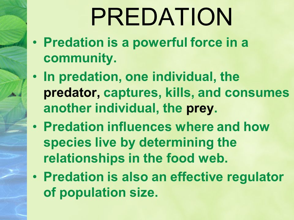 PREDATION Predation is a powerful force in a community. In predation, one individual, the predator, captures, kills, and consumes another individual,