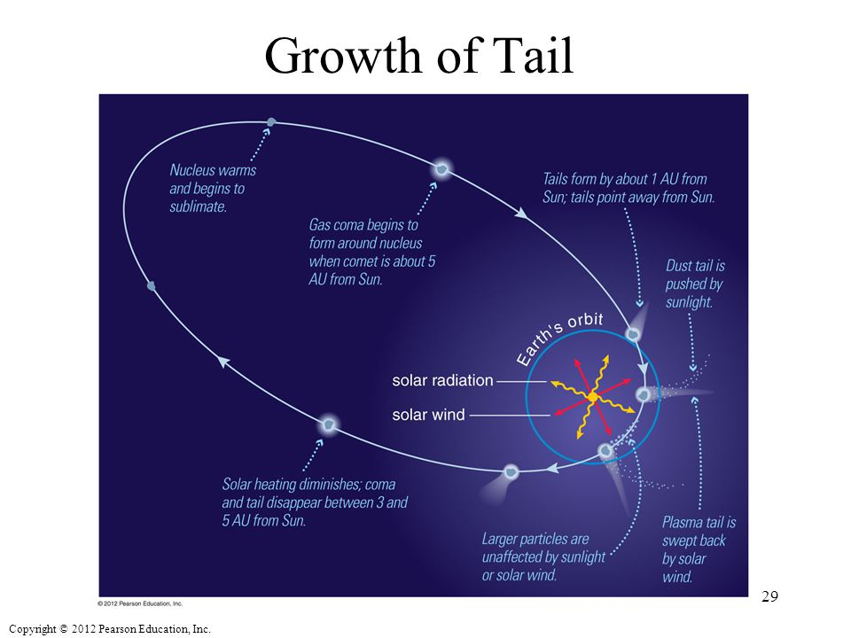 Copyright © 2012 Pearson Education, Inc. Growth of Tail 29