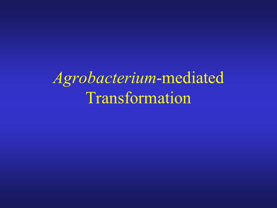 Agrobacterium-mediated Transformation