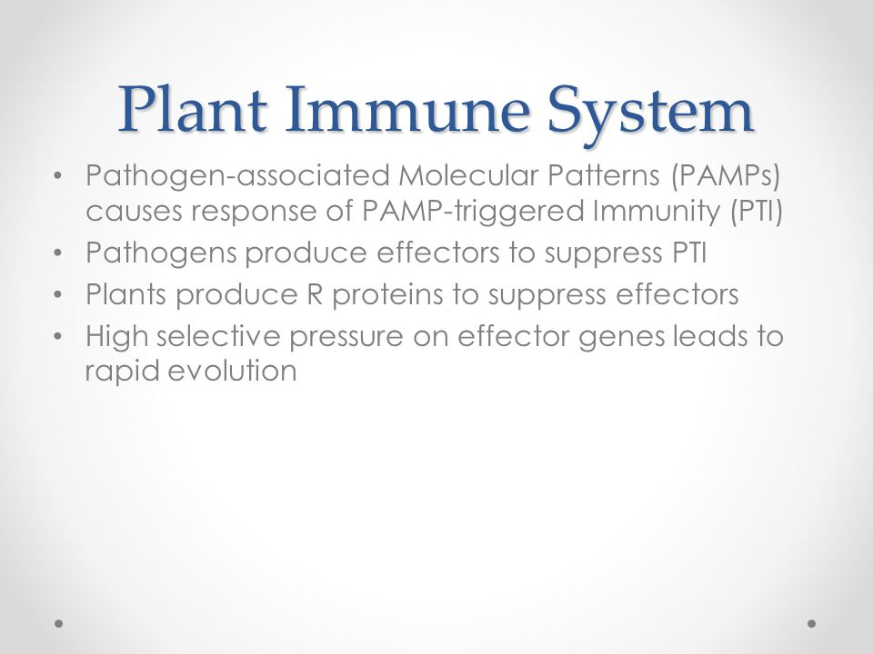 Plant Immune System Pathogen-associated Molecular Patterns (PAMPs) causes response of PAMP-triggered Immunity (PTI) Pathogens produce effectors to suppress PTI Plants produce R proteins to suppress effectors High selective pressure on effector genes leads to rapid evolution