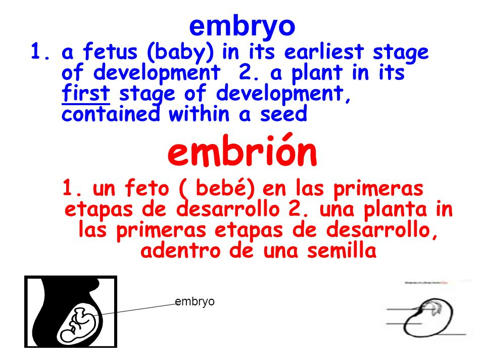 embryo 1.a fetus (baby) in its earliest stage of development 2.
