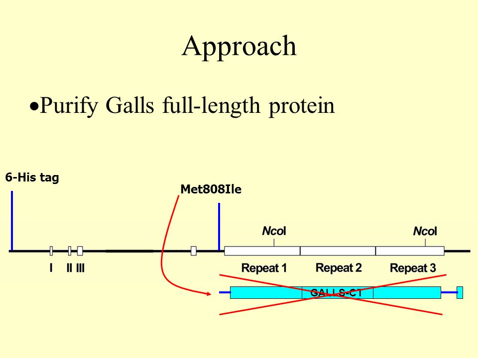 Approach  Purify Galls full-length protein GALLS-CT Met808Ile 6-His tag