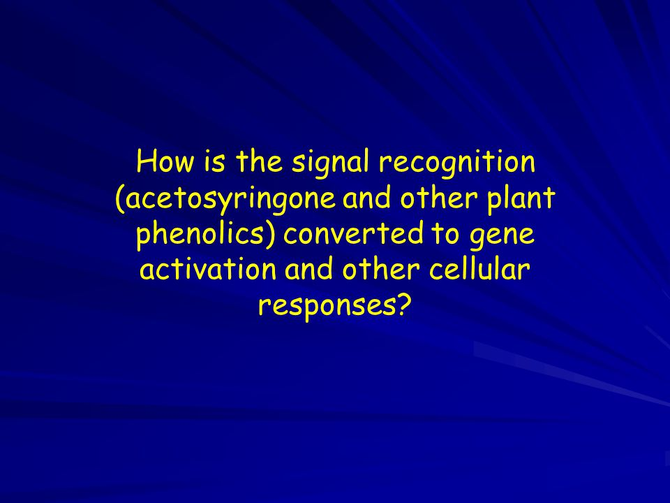 How is the signal recognition (acetosyringone and other plant phenolics) converted to gene activation and other cellular responses?
