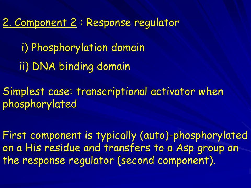 2. Component 2 : Response regulator i) Phosphorylation domain ii) DNA binding domain Simplest case: transcriptional activator when phosphorylated Firs