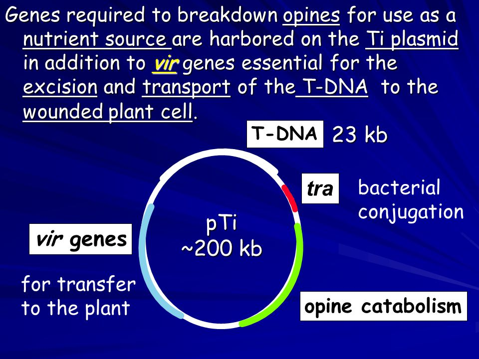 Genes required to breakdown opines for use as a nutrient source are harbored on the Ti plasmid in addition to vir genes essential for the excision and