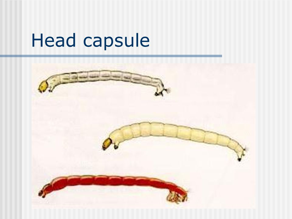 Head capsule