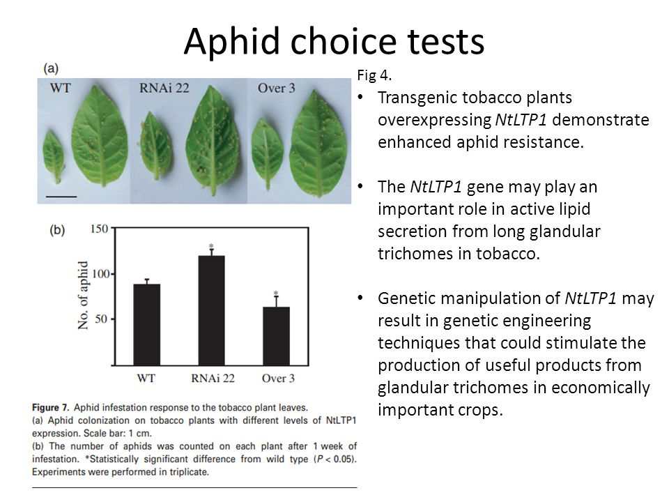 Transgenic tobacco plants overexpressing NtLTP1 demonstrate enhanced aphid resistance.