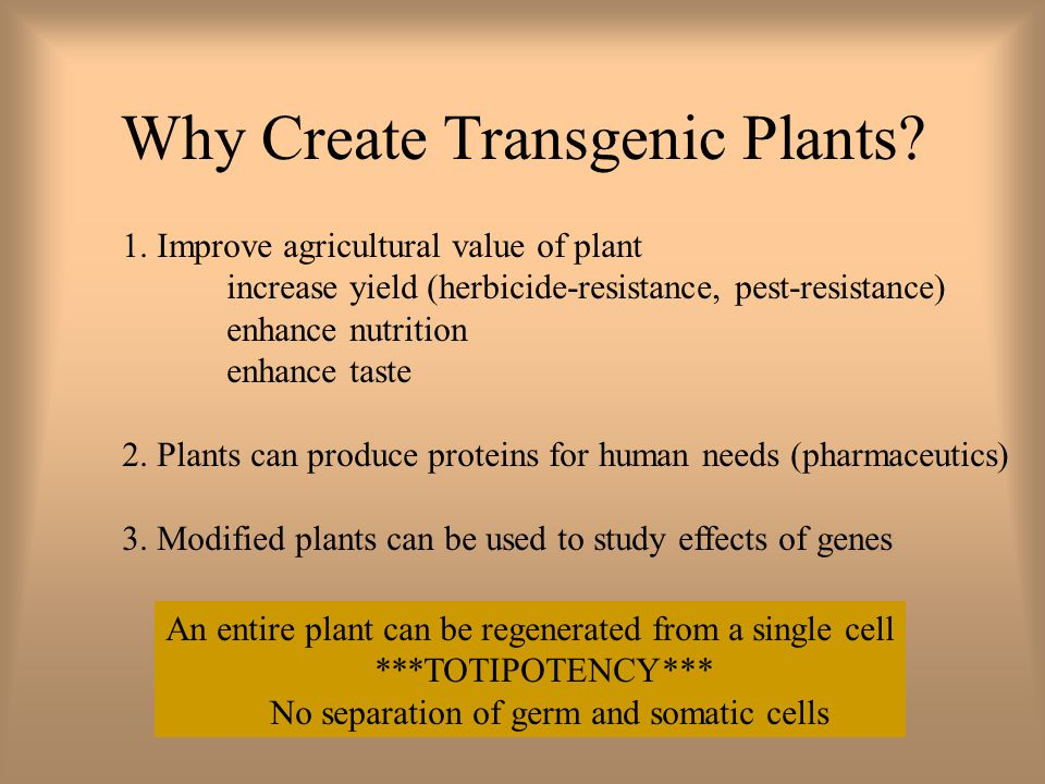 Why Create Transgenic Plants. 1.