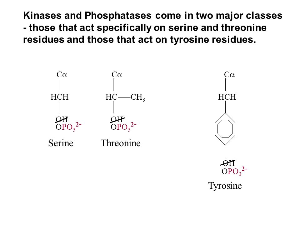 Kinases and Phosphatases come in two major classes - those that act specifically on serine and threonine residues and those that act on tyrosine resid