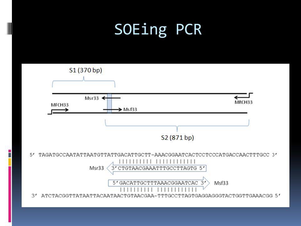 SOEing PCR