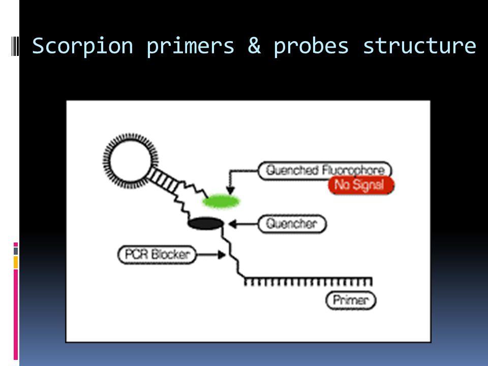 Scorpion primers & probes structure