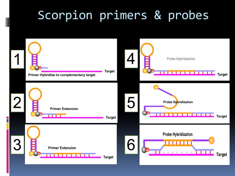 Scorpion primers & probes 1 2 3 5 4 6