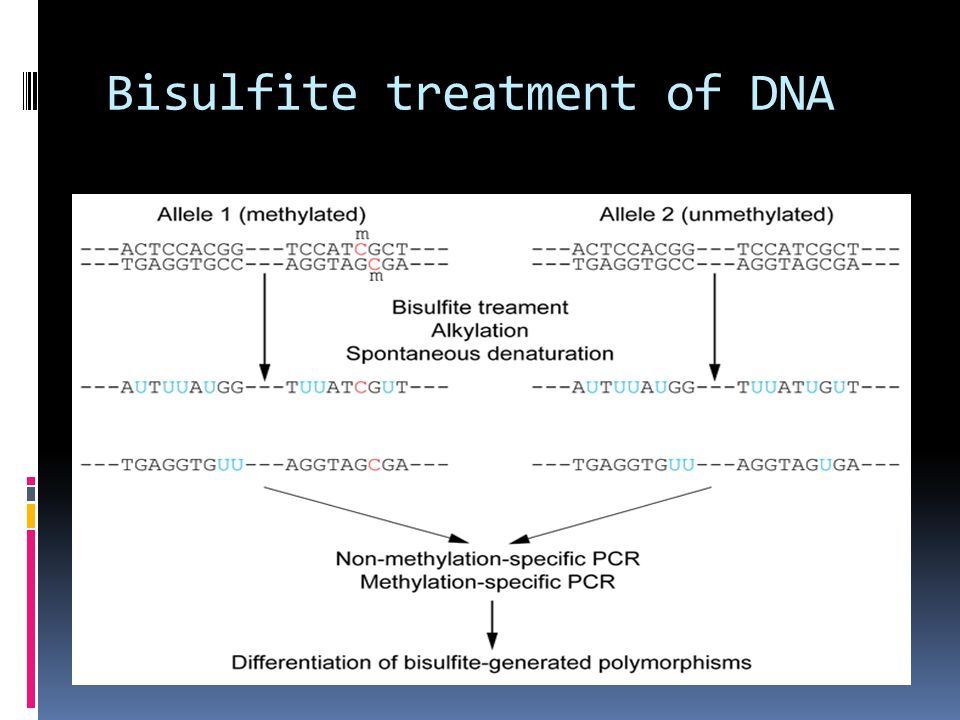 Bisulfite treatment of DNA