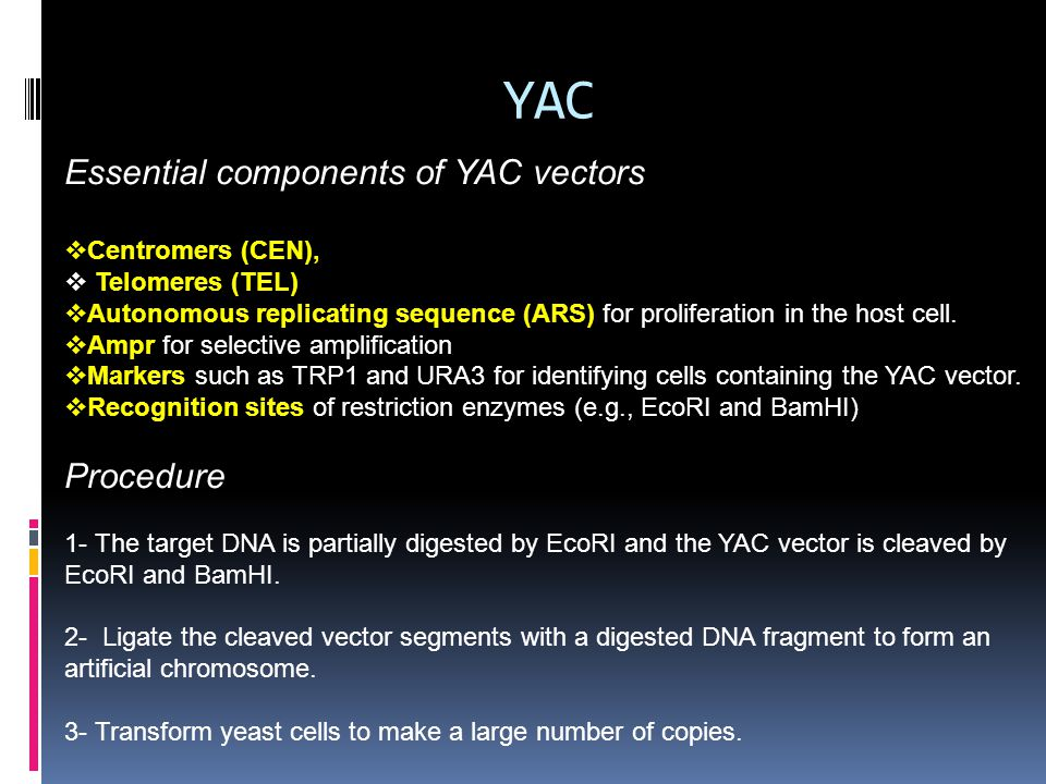 YAC Essential components of YAC vectors  Centromers (CEN),  Telomeres (TEL)  Autonomous replicating sequence (ARS) for proliferation in the host ce