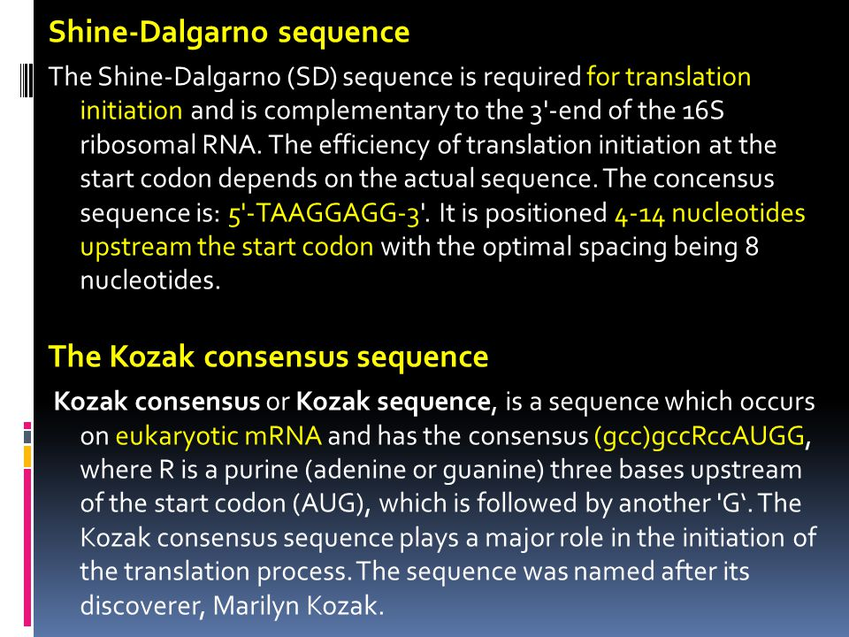 Shine-Dalgarno sequence The Shine-Dalgarno (SD) sequence is required for translation initiation and is complementary to the 3'-end of the 16S ribosoma