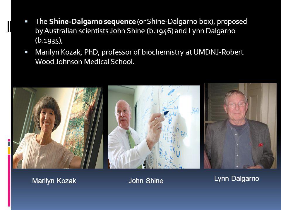  The Shine-Dalgarno sequence (or Shine-Dalgarno box), proposed by Australian scientists John Shine (b.1946) and Lynn Dalgarno (b.1935),  Marilyn Koz