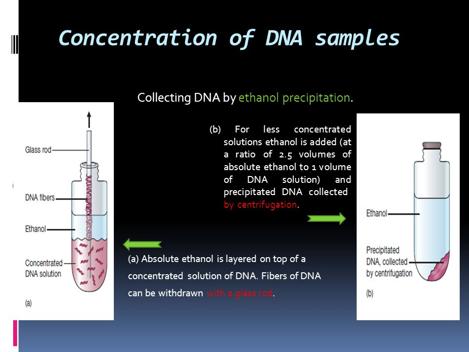 Concentration of DNA samples (a) Absolute ethanol is layered on top of a concentrated solution of DNA. Fibers of DNA can be withdrawn with a glass rod
