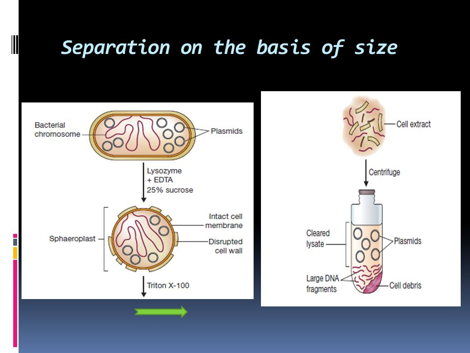 Separation on the basis of size