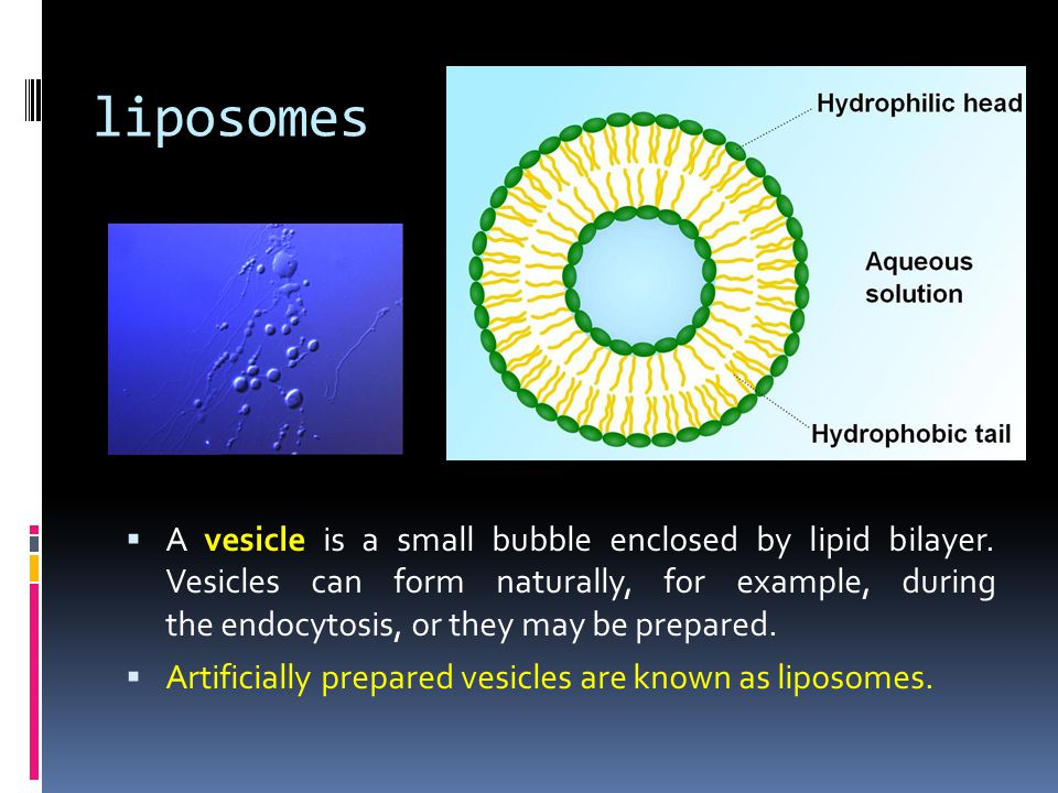 liposomes  A vesicle is a small bubble enclosed by lipid bilayer. Vesicles can form naturally, for example, during the endocytosis, or they may be pr