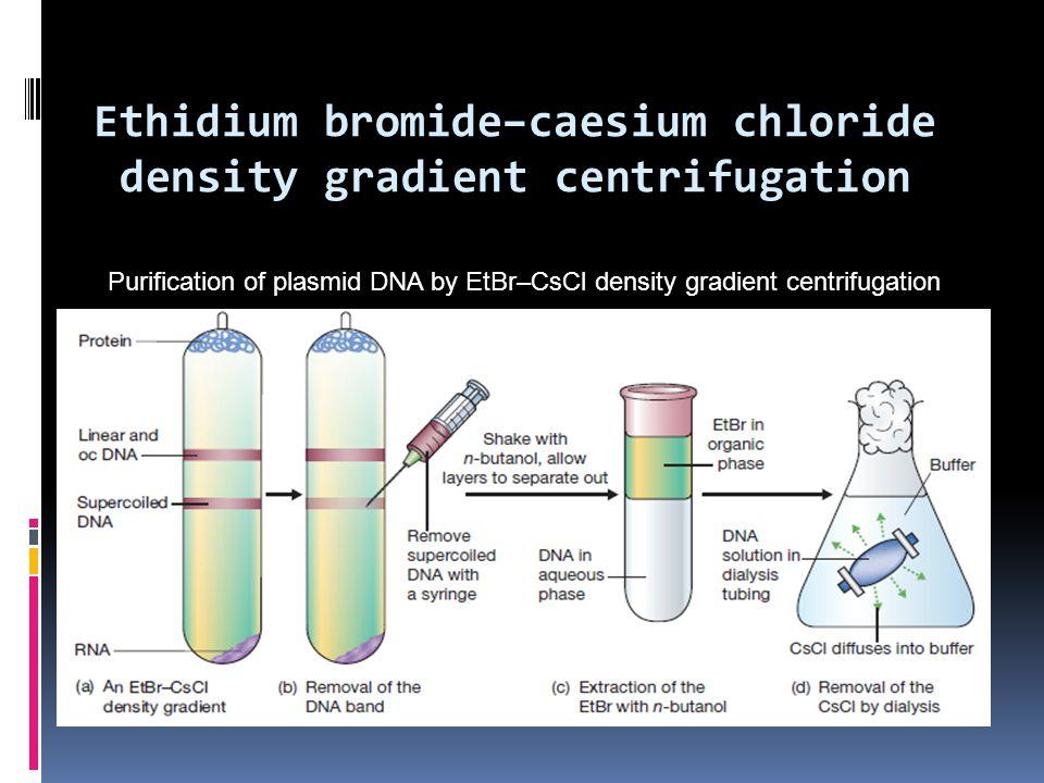 Purification of plasmid DNA by EtBr–CsCl density gradient centrifugation Ethidium bromide–caesium chloride density gradient centrifugation