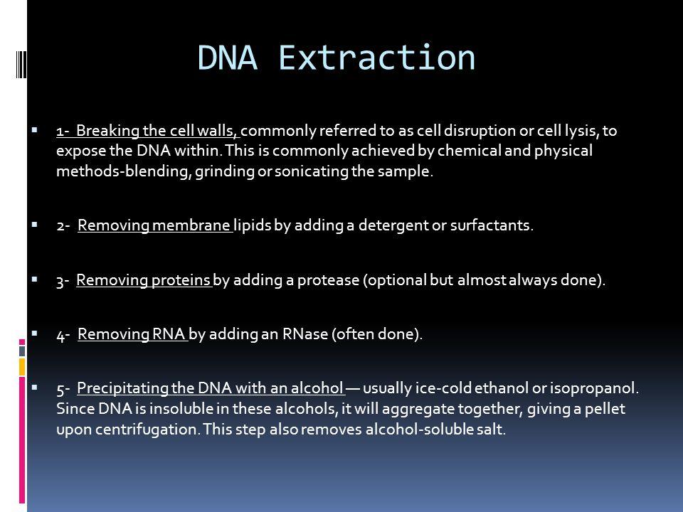 DNA loading 3000-4000 bp