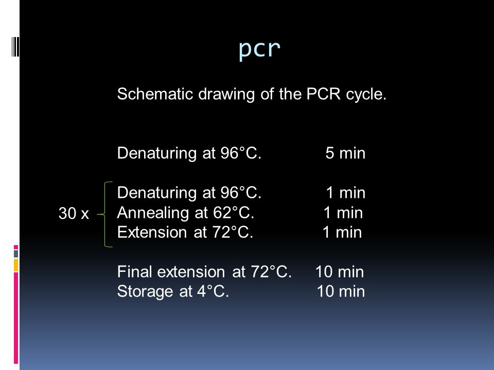 pcr Schematic drawing of the PCR cycle. Denaturing at 96°C. 5 min Denaturing at 96°C. 1 min Annealing at 62°C. 1 min Extension at 72°C. 1 min Final ex