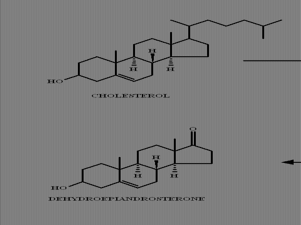 natural mamalian estrogens; plants also produce estrogenic substances (isoflavones)