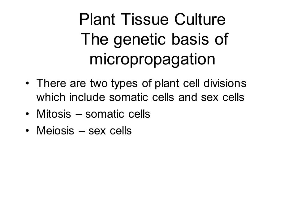 Plant Tissue Culture Meristematic tissue - which are undifferentiated cells from shoot and root tips that have not been programmed for their ultimate