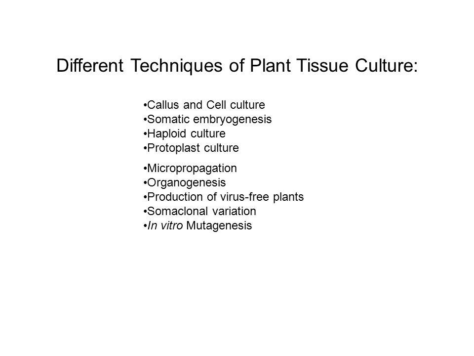 Seed culture Organ culture Callus culture Cell culture Protoplast culture Types of Cultures