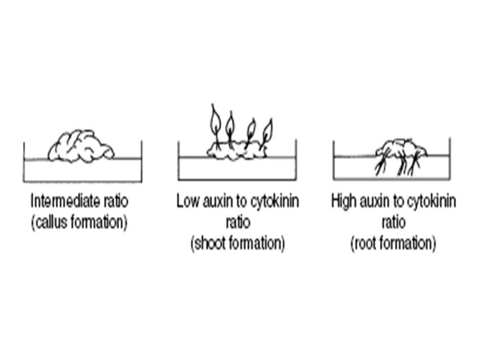 Plant Growth Regulators Auxins -- IAA, IBA, NAA, 2,4-D, TDZ, Dicamba, etc.Auxins -- IAA, IBA, NAA, 2,4-D, TDZ, Dicamba, etc.