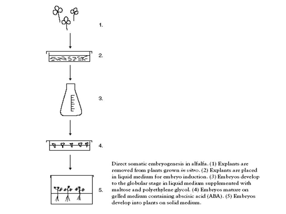 Cloning Vectors -carrier for DNA during the recombinant DNA process.