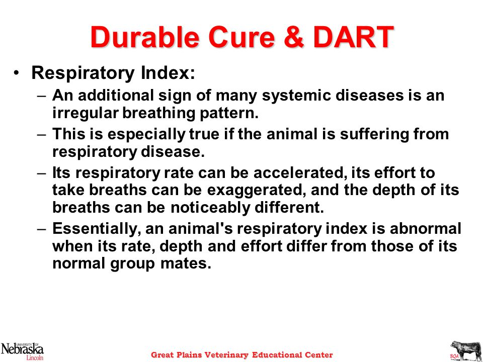 Great Plains Veterinary Educational Center Durable Cure & DART Respiratory Index: –An additional sign of many systemic diseases is an irregular breath