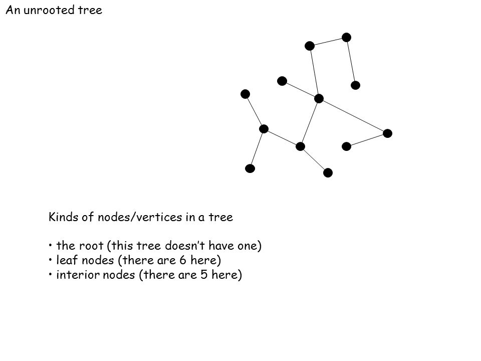 An unrooted tree Kinds of nodes/vertices in a tree the root (this tree doesn't have one) leaf nodes (there are 6 here) interior nodes (there are 5 her