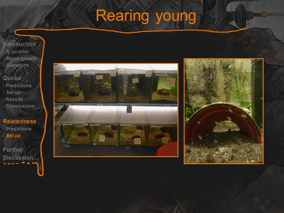Rearing young Introduction - N.
