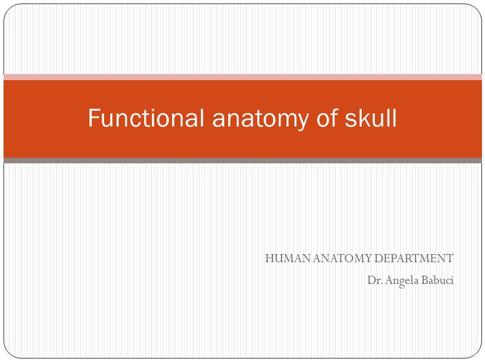 HUMAN ANATOMY DEPARTMENT Dr. Angela Babuci Functional anatomy of skull