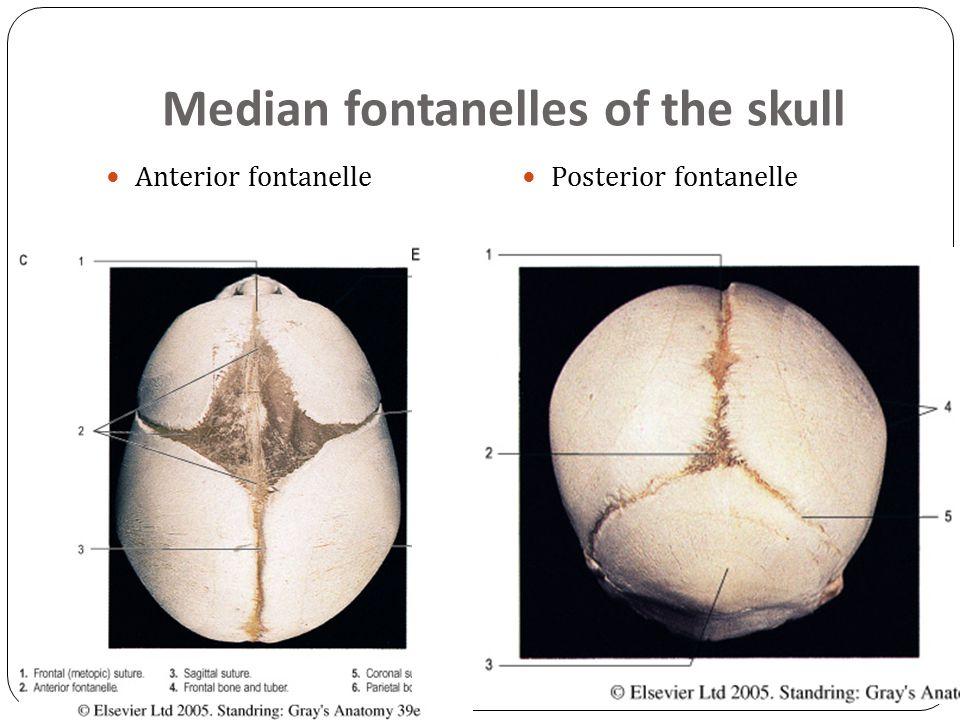 Median fontanelles of the skull Anterior fontanelle Posterior fontanelle