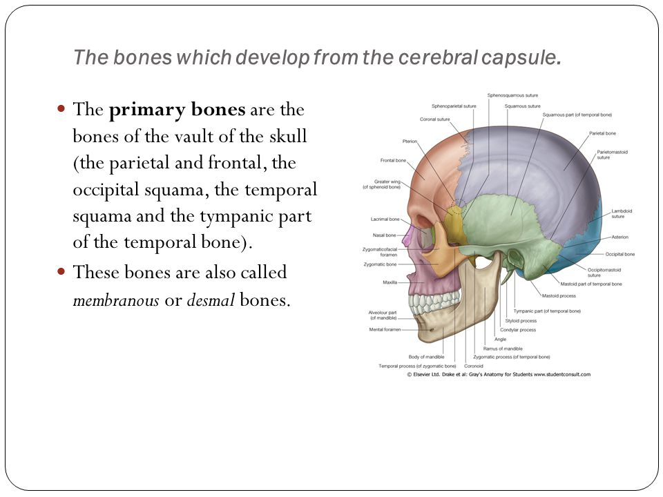 The bones which develop from the cerebral capsule.