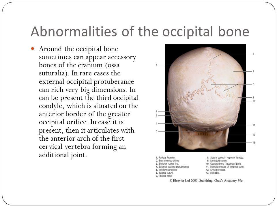 Abnormalities of the occipital bone Around the occipital bone sometimes can appear accessory bones of the cranium (ossa suturalia). In rare cases the